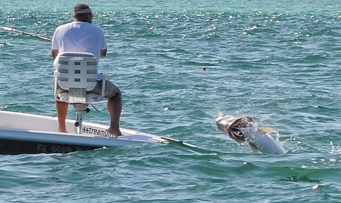 Tarpon help fort myers area the hull truth boating and for Florida fishing forum